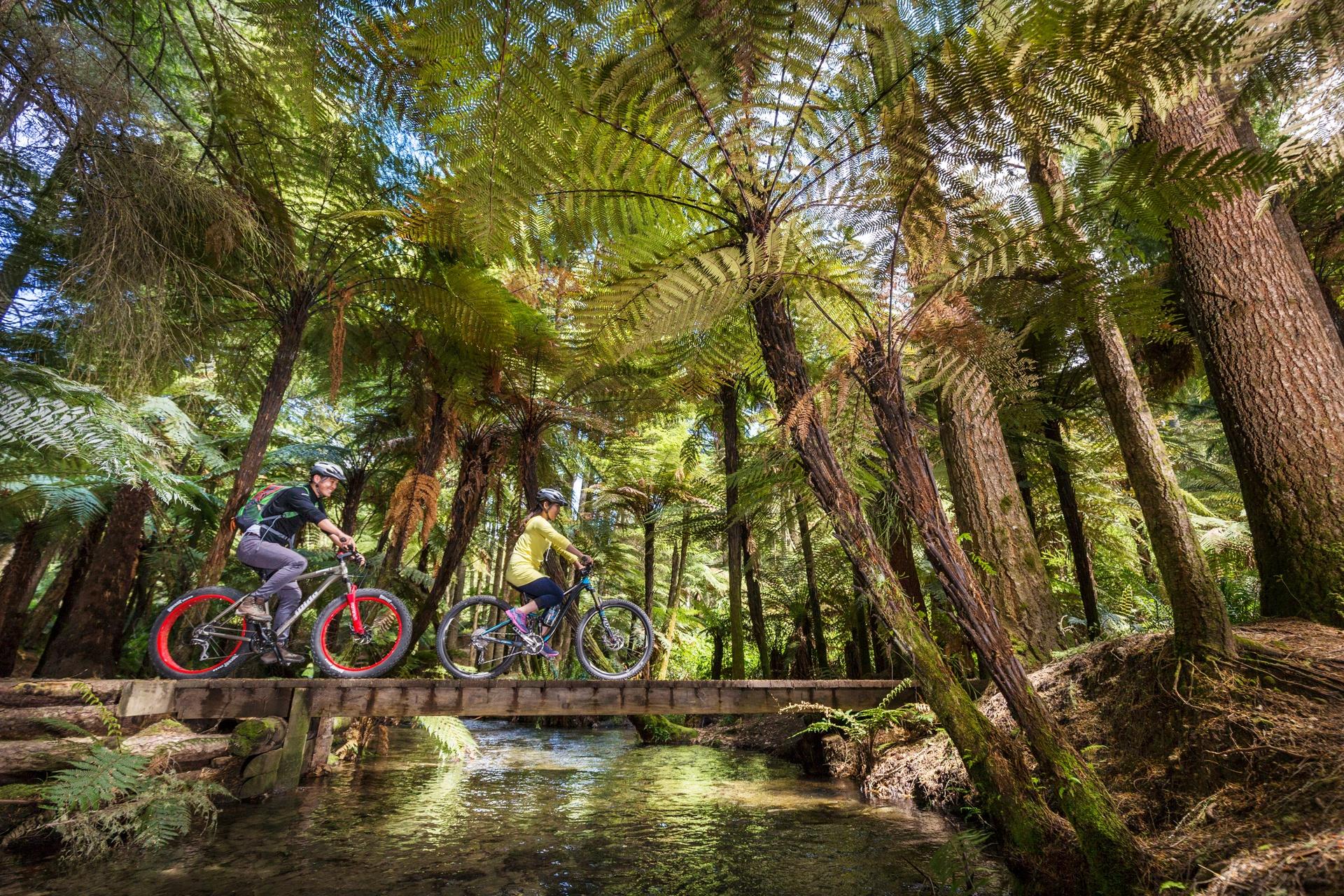 Cycle through Whakarewarewa Forest, Rotorua